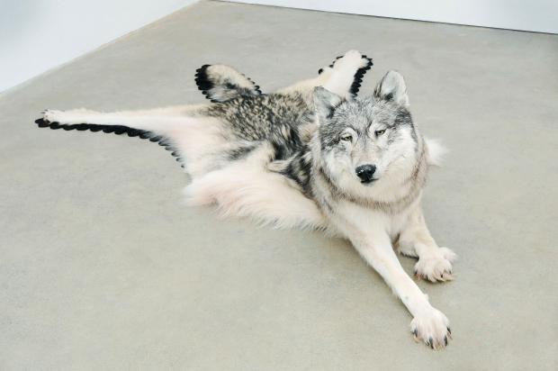Inert Wolf av Yéil Ya-Tseen (Nicholas Galanin)